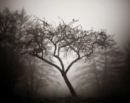 sorrow-dreamstone